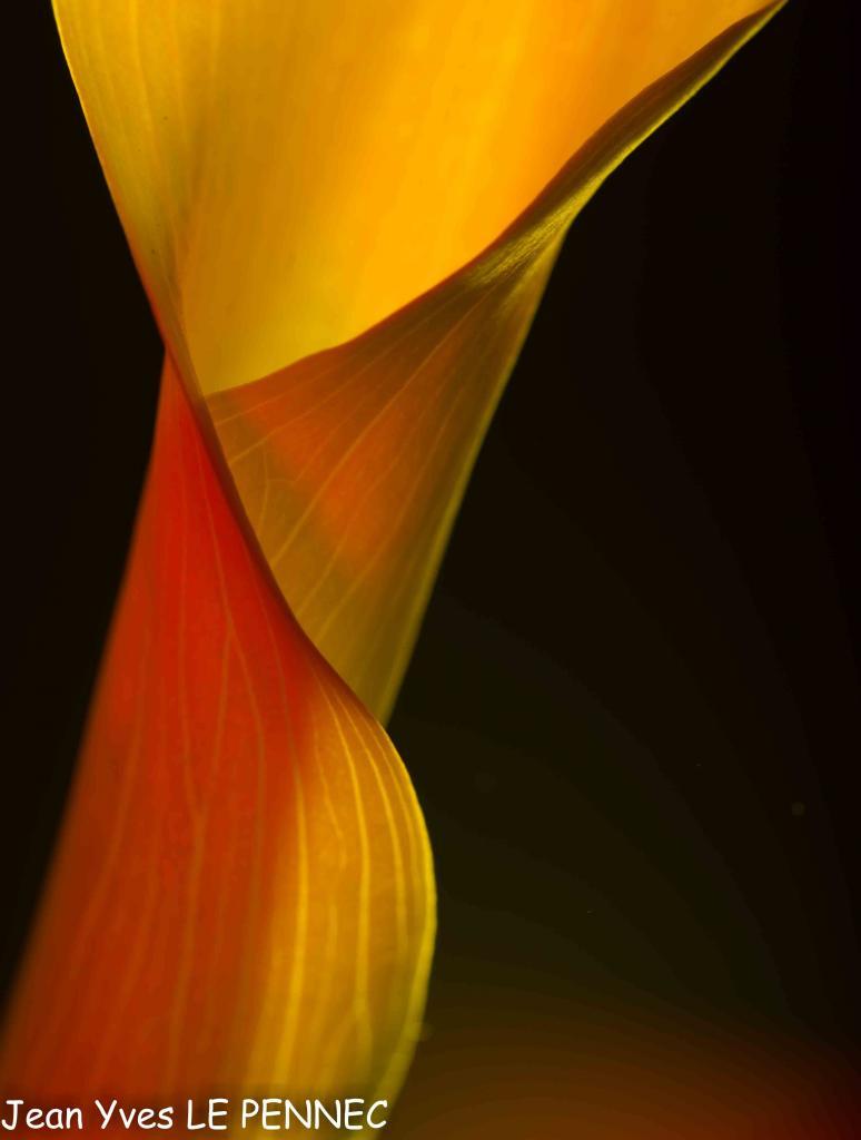Arums colorés-8