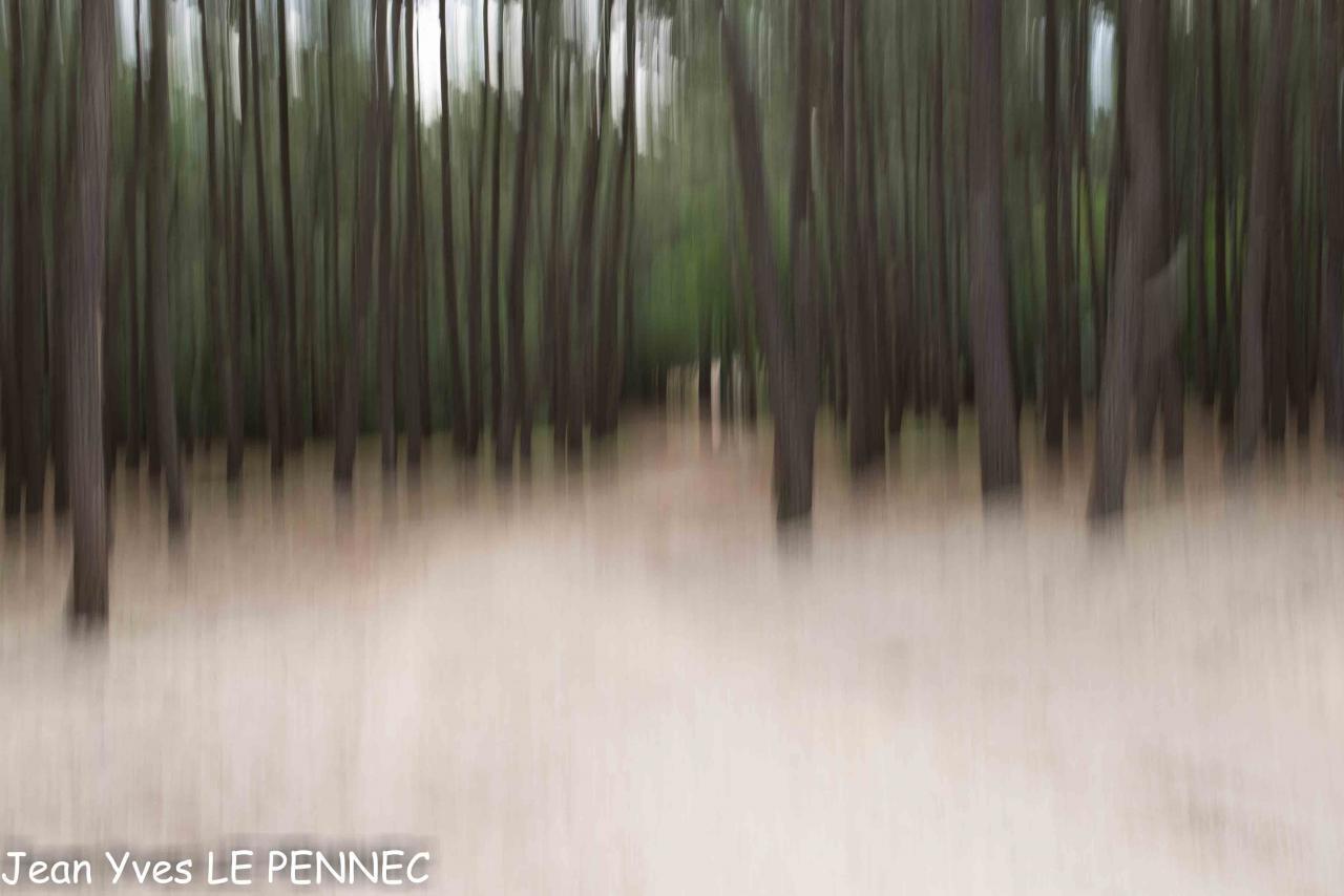 Forêts de rêve