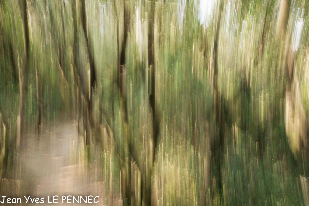 forêt de rêve-002