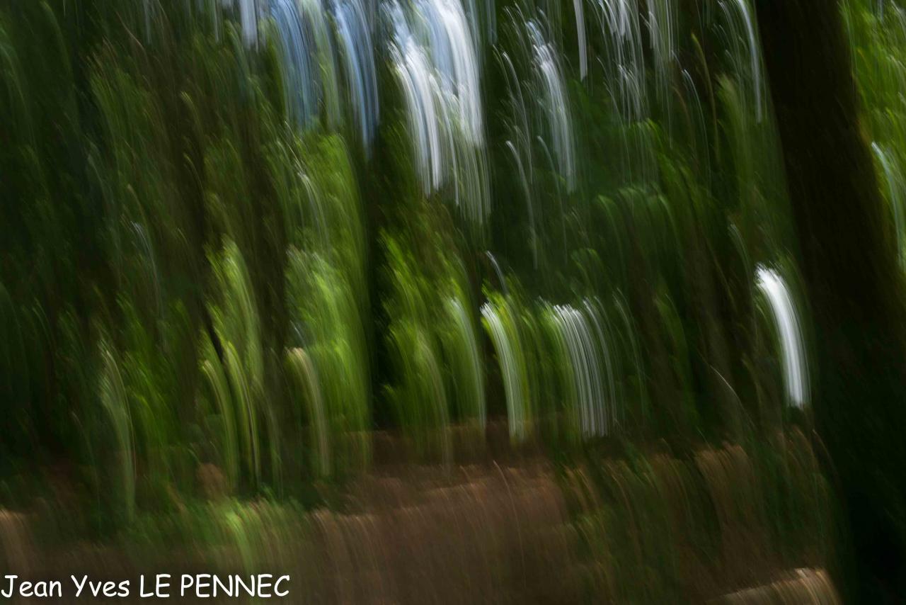 forêt de rêve-003