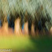 forêt de rêve-005
