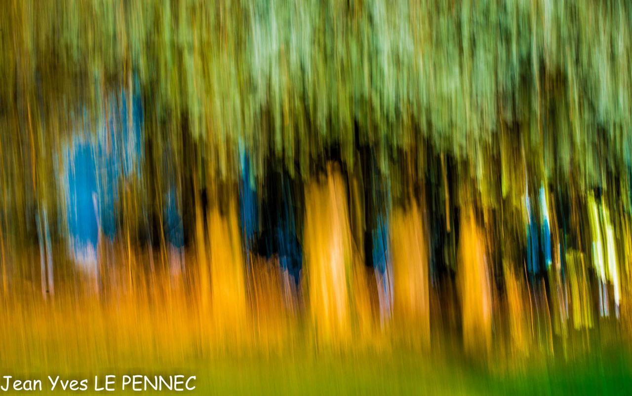 forêt de rêve-006