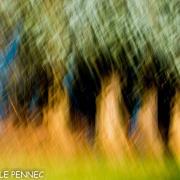 forêt de rêve-007