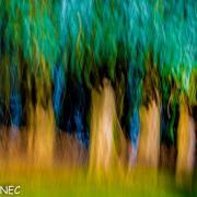 forêt de rêve-008