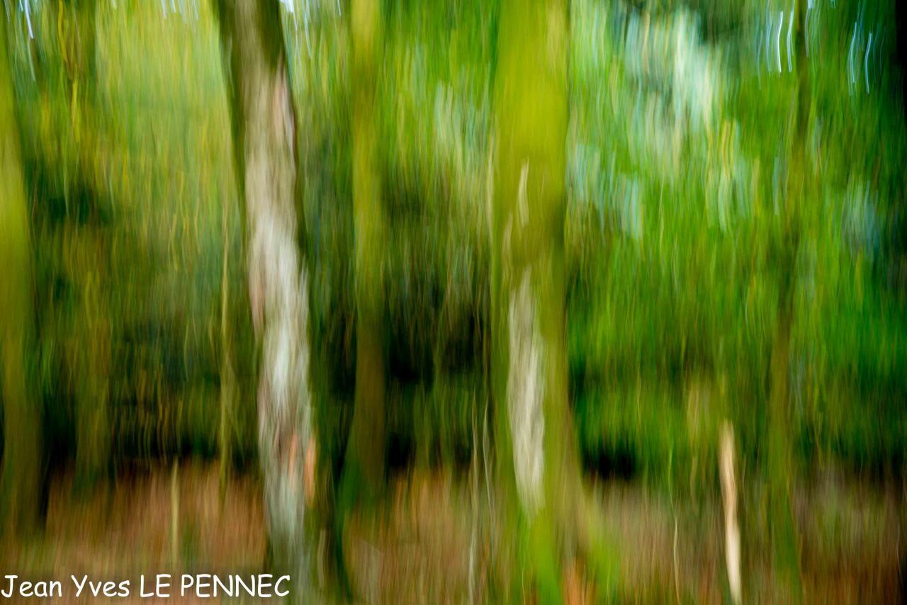 forêt de rêve-009