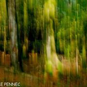 forêt de rêve-010