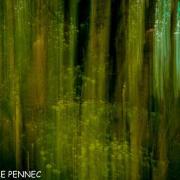 forêt de rêve-015