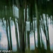 forêt de rêve-016