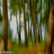 forêt de rêve-017