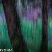 forêt de rêve-019