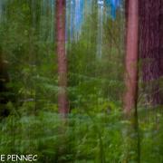 forêt de rêve-020