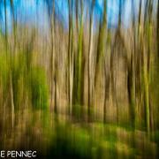 forêt de rêve-021
