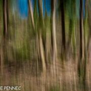 forêt de rêve-022