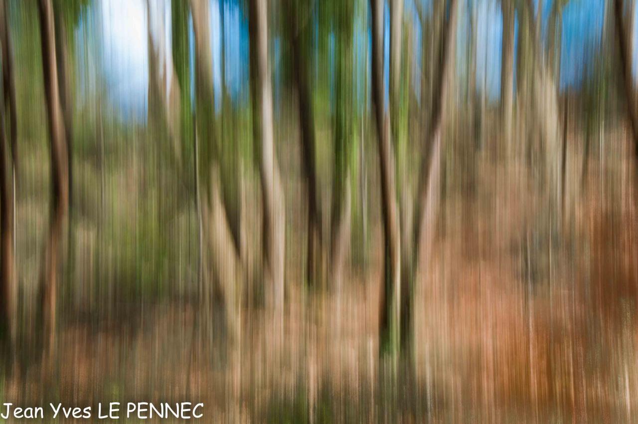 forêt de rêve-023