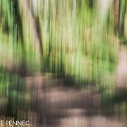 forêt de rêve-024