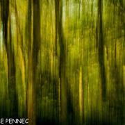 forêt de rêve-025