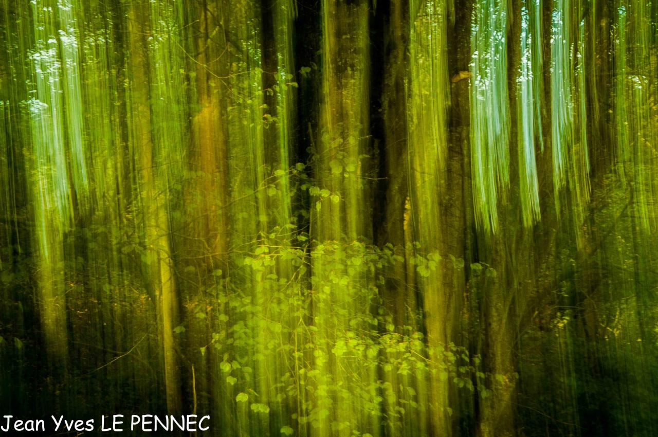 forêt de rêve-026