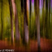 forêt de rêve-027