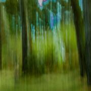 forêt de rêve-028
