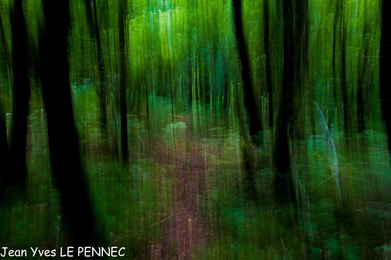 forêt de rêve-029