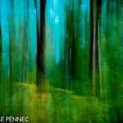 forêt de rêve-030