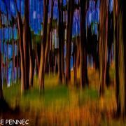 forêt de rêve-031
