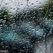 shooting in the rain... (16)