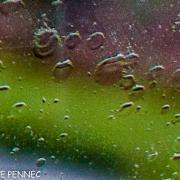 shooting in the rain... (4)