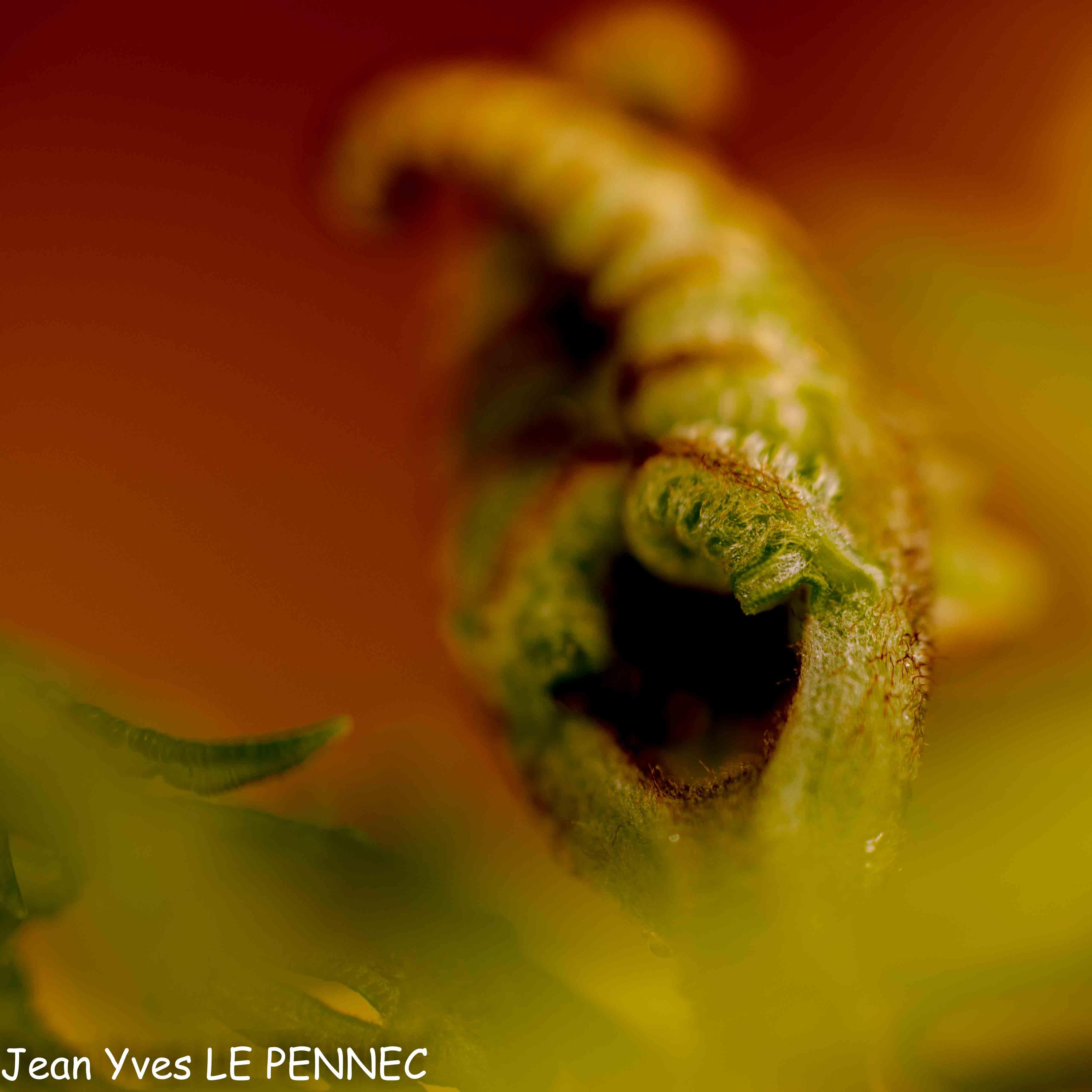 végétal autrement-6